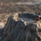 Small Centipede On Mud Volcano - VideoHive Item for Sale