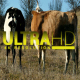 Herd of Cows 4 - VideoHive Item for Sale