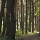 Morining Pines Forest Pack - VideoHive Item for Sale