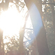 Trees and SunLight - VideoHive Item for Sale