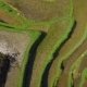 Rice Terraces At Indonesia, Bali. - VideoHive Item for Sale