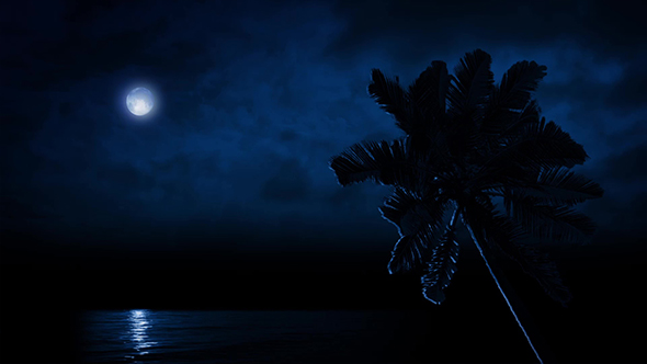 palm tree by sea lit up by moonlight by rockfordmedia videohive