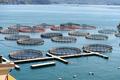fish farming in La Spezia, Italy - PhotoDune Item for Sale