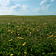Summer Fields - VideoHive Item for Sale