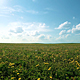 Summer Field - VideoHive Item for Sale