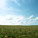 Summer Sunny Fields - VideoHive Item for Sale