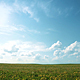 Blu Sky Over The Sunny Field - VideoHive Item for Sale