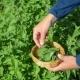 Gardener Woman Hand Pick Lemon-Balm Herb Plant Leaves In Garden - VideoHive Item for Sale