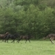 Herd Of Hurrying Horse On The Field - VideoHive Item for Sale