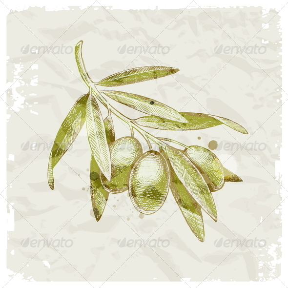 Hand Drawn Olive Branch - Nature Conceptual