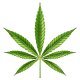 Marijuana Leaf - GraphicRiver Item for Sale