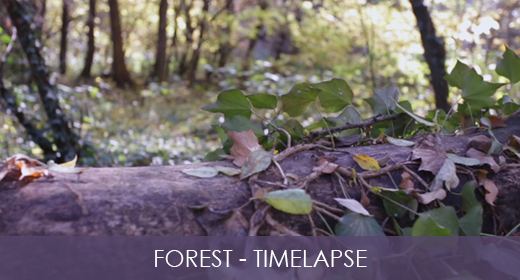 Forest - Slider & TimeLapse