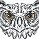 Owl Illustration - GraphicRiver Item for Sale