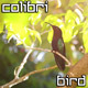 Colibri, Humming Bird - VideoHive Item for Sale