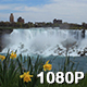 Daffodils and American Falls - VideoHive Item for Sale