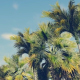 Driving Through PalmTrees - Noon - VideoHive Item for Sale