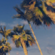 Driving Through Palm Trees - Sunset - VideoHive Item for Sale