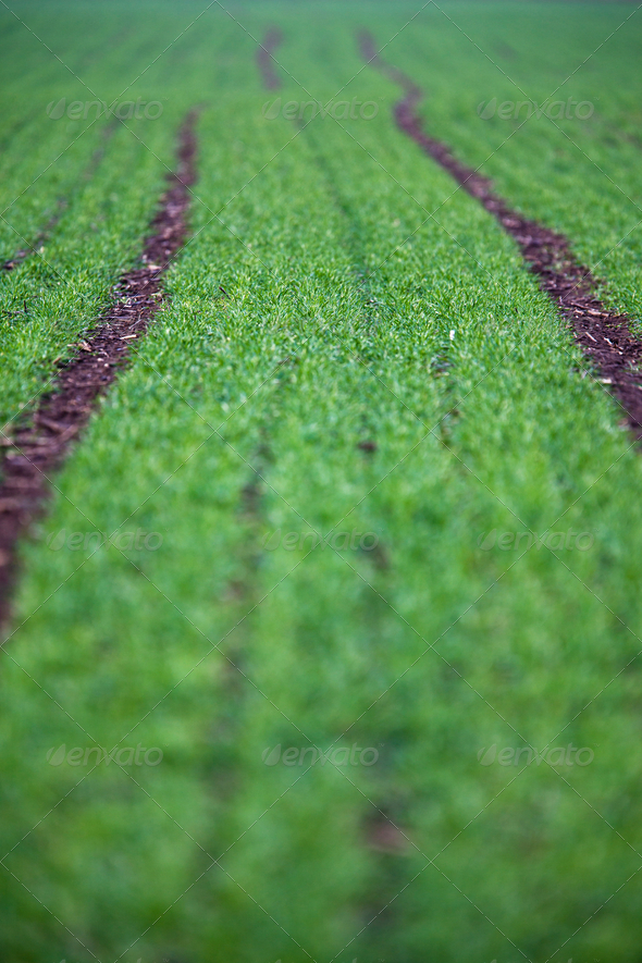 Green field with a lovely perspective - Stock Photo - Images