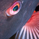 Eye of a colorful fish - PhotoDune Item for Sale