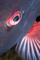 Eye of a colorful fish