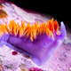 Nudibranch snail on underwater reef - PhotoDune Item for Sale