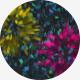 Confetti Burst Pack - VideoHive Item for Sale