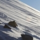 Blizzard And Blowing Snow On The Mountain. The Surroundings Of Longyearbyen, Svalbard. - VideoHive Item for Sale