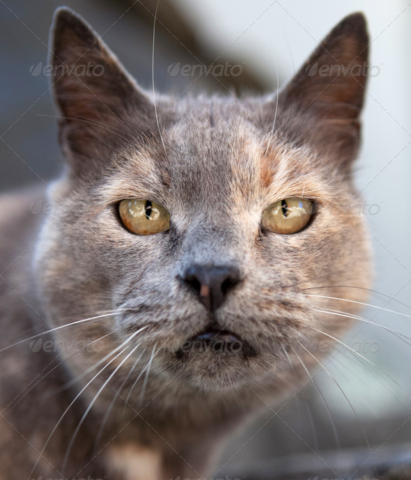 Close-up portrait of a cat in a bad mood - Stock Photo - Images