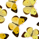 Seamless Ornament with Butterfly - GraphicRiver Item for Sale