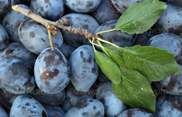 Plums - Stock Photo - Images