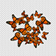 The Group of Butterflies on a Transparent Background - VideoHive Item for Sale