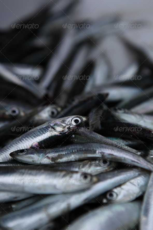 Fresh Anchovy / Sardines - Stock Photo - Images