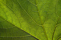 Green leaf close-up - PhotoDune Item for Sale