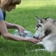 Woman Gives To Drink Her Dog In The Park - VideoHive Item for Sale