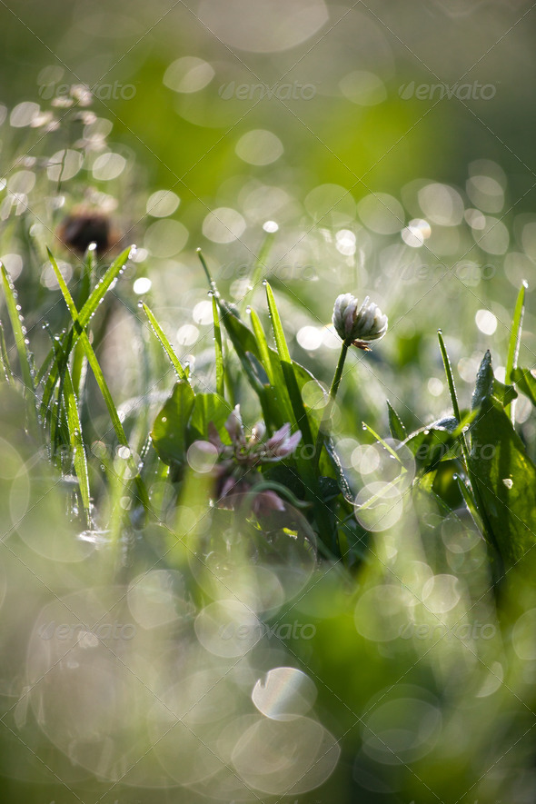 lovely morning dew - Stock Photo - Images
