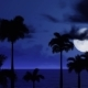 Black Palm Trees And Night Clouds With Moon - VideoHive Item for Sale