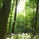 Sun Shining Through Of Tall Trees - VideoHive Item for Sale