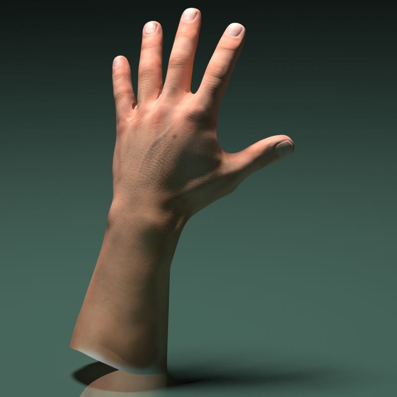 3d Model Human Male Hand By Vefilanna 3docean
