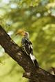 hornbill - PhotoDune Item for Sale