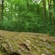Fallen Wooden Trunk In Forest - VideoHive Item for Sale