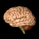 Human Brain Gyrating - VideoHive Item for Sale