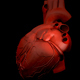 Human Heart in Rotation - VideoHive Item for Sale