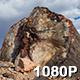 Beautiful Petrified Wood in Arizona Desert - VideoHive Item for Sale