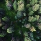 Forest In Center Of Siberia Nulled