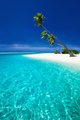 Beach on a tropical island with palm trees overhanging lagoon - PhotoDune Item for Sale