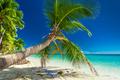 Palm tree overhanding the inviting lagoon on Fiji Island - PhotoDune Item for Sale