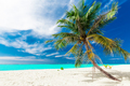 Single vibrant coconut palm tree on a white tropical beach, Mald - PhotoDune Item for Sale