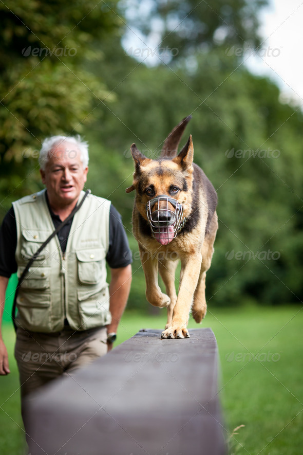 Master and his obedient (German shepherd) dog at a dog training - Stock Photo - Images
