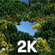 Flight through Tree to Sky - VideoHive Item for Sale