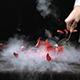 Liquid Nitrogen Freezes Flower - VideoHive Item for Sale